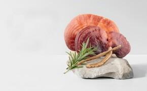 Královská houba Reishi