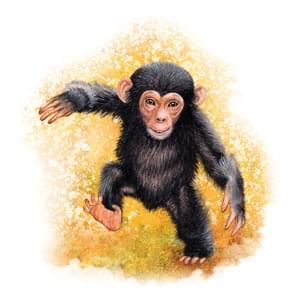 opičák